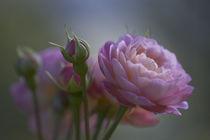 Rosenlicht von lightspectral