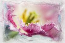Tulpe, Papier von Christoph Hermann
