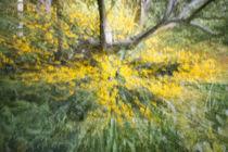 Heller Garten 2 von Christoph Hermann