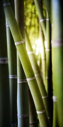 Lichtblick im Bambuswald von Christoph Hermann
