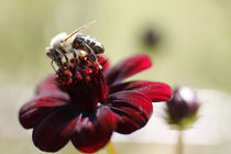 Busy Bee by Christina Loehr