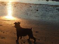 Hund bei Sonnenaufgang by Florian Steinig
