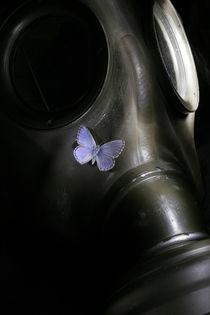 Butterfly by Dominik Probst