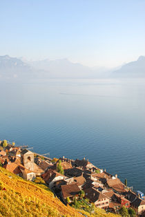 Lavaux by dreamyfaces