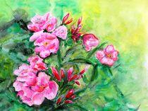 Rosa Oleander by Caroline Lembke