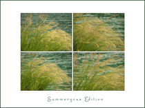 summer gras edition by Beatrice Amberg