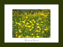 sunny gras framed by Beatrice Amberg