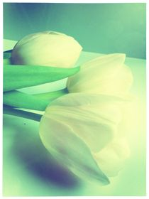 Tulips by Beatrice Amberg
