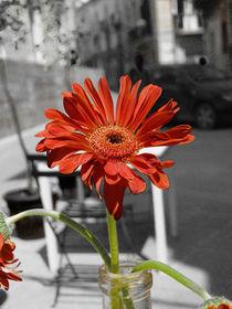 Syracusa Flower von Nils Volkmer