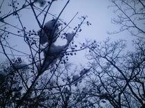 Fruchtzweige im Winter von mondschwester