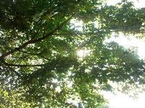 Laubzweige des Ahornbaumes im Sommerhimmel von mondschwester