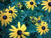 Gelbe Blumen mit dunkelgrünen Blättern by mondschwester
