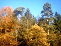 Ein idealer Herbsttag von mondschwester