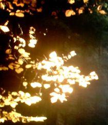 goldener Zweig von mondschwester