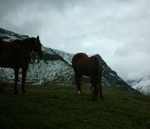 Zwei Pferde in den Bergen by mondschwester