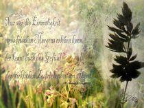 Morgenwiese von Reiner Schewior