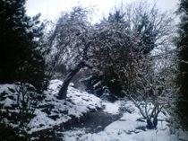 Ein winterlicher Märchenwald von mondschwester