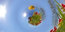 Tulpen -  Doppelprojektion by Michael Hundrieser