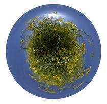 Rapsfeld - polare Projektion von Michael Hundrieser