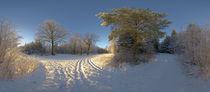 Waldkreuzung im Winter mit Bäumen von Michael Hundrieser