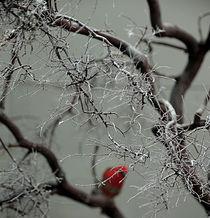 Red Bird by Stefanie Kettenring