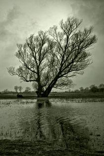 Der Baum von Holger Brust