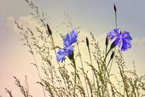summer feeling von Ingrid Clement-Grimmer