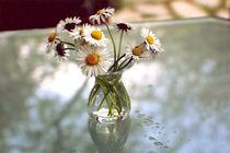 Stilleben Gänseblümchen von Ingrid Clement-Grimmer