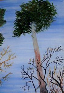 Kiefer, Pine von annas