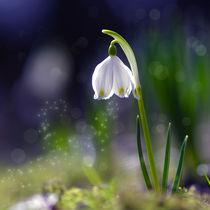Frühlingsgruß von Dagmar Bittner