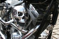 Harley8 by dirio