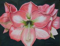 Amaryllis von Helga Mosbacher