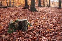 Waldboden und Baumstumpf mit Herbstblättern von rotschwarzdesign