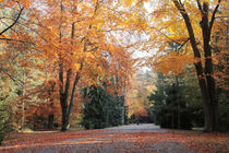 Herbstweg by rotschwarzdesign
