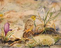 Bergfink an Schneeglöckchen by Claudia Janßen