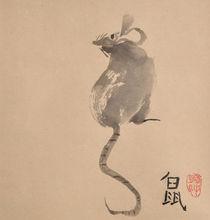 Eine Ratte von Claudia Janßen