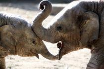 Elefantenkuss by ny
