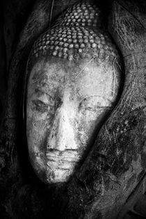 Buddha Face by Stefano Pedroni