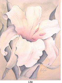 Lilie by Theodor Fischer