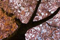 Unterm Baum liegen von Artur Sonnengrün