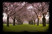 Frühlingstraum von Artur Sonnengrün