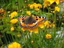 Schmetterling auf Blume von Sebastian Dierkes