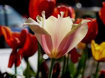 Tulpen von Sikiru Adebiyi