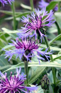 Blumen by Sikiru Adebiyi