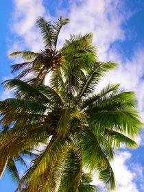 Ein ganz normaler Tag in Fiji von Manuel Emig