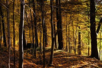 Herbstwald - Autumn Forest by fotokunst