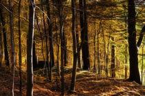 Herbstwald - Autumn Forest von fotokunst