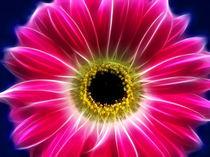 Floral 1 von fotokunst