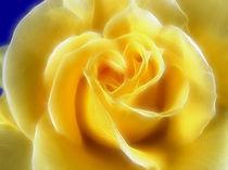 Floral 2 by fotokunst