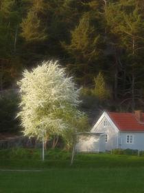 Blühender Baum von fotokunst